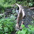 写真: 180727-7小さな川を渡ります