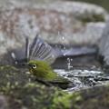 写真: 私の野鳥図鑑(蔵出し)・120315メジロ