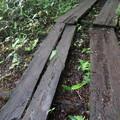 Photos: 190725-22大江湿原と尾瀬沼・尾瀬沼時計回り一周・私が初めて滑って転んだ木道