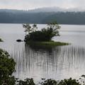 Photos: 190725-26大江湿原と尾瀬沼・尾瀬沼時計回り一周・尾瀬沼にはこんな島?もあります