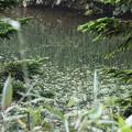 190725-27大江湿原と尾瀬沼・尾瀬沼時計回り一周・尾瀬沼の一部