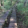Photos: 190725-31大江湿原と尾瀬沼・尾瀬沼時計回り一周・延々と続く木道