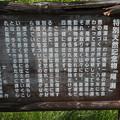 Photos: 190725-36大江湿原と尾瀬沼・尾瀬沼時計回り一周・特別天然記念物 尾瀬
