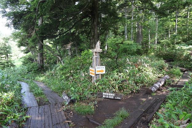 190725-39大江湿原と尾瀬沼・尾瀬沼時計回り一周・燧ヶ岳への登山道長英新道分岐