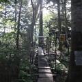 Photos: 190725-40大江湿原と尾瀬沼・尾瀬沼時計回り一周・シカ侵入防止柵