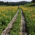 Photos: 190725-43大江湿原と尾瀬沼・大江湿原・木道とニッコウキスゲ