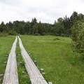 Photos: 190725-65大江湿原と尾瀬沼・尾瀬沼反時計回り一周・小沼湿原