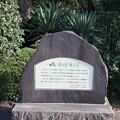 191117-171明治神宮、原宿そして神宮外苑・神宮外苑・あるけあるけ