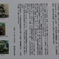 191117-173明治神宮、原宿そして神宮外苑・神宮外苑・ひとつばたご