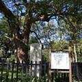 191117-175明治神宮、原宿そして神宮外苑・神宮外苑・葬場殿址