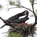 200522-3私が雛が孵ったと確認してから20日目・給餌