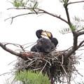 200523-2私が雛が孵ったと確認してから21日目・何をしているの?
