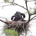 200523-4私が雛が孵ったと確認してから21日目・面白い姿を見せてくれました