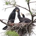 200523-6私が雛が孵ったと確認してから21日目・給餌