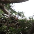 200603-8雛が孵ったと思われる日から21日目・初めて撮れた雛が二羽いるという証拠写真