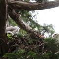 200603-11雛が孵ったと思われる日から21日目・初めて二羽の雛の顔が撮れました♪