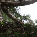 200603-13雛が孵ったと思われる日から21日目・二羽の雛