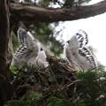 200603-16雛が孵ったと思われる日から21日目・二羽の雛の羽