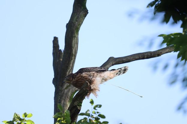 200702-24雛が孵ったと思われる日から50目・今日も快便・幼鳥