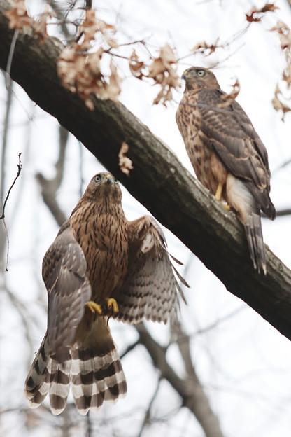200703-15雛が孵ったと思われる日から51日目・幼鳥2羽(1/3)