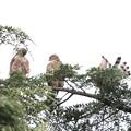 Photos: 200716-14雛が孵ったと思われる日から64日目・幼鳥3羽・右のコは何をしているのでしょう?