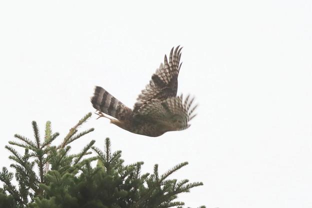 200729-3雛が孵ったと思われる日から77日目・幼鳥の飛び出し(2/7)