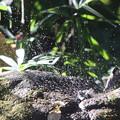 201126-11シジュウカラの水浴び・ヤマガラ「一緒に入ろうと思ったのにのに無理ね」(6/6)