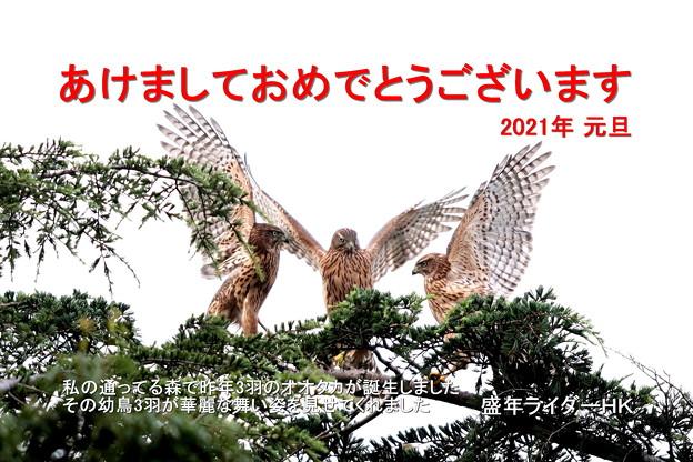 Photos: 年賀状