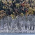 Photos: 冬への曲がり角