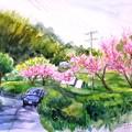 11桃の花咲く