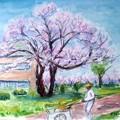 17付属校の桜