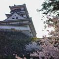 Photos: 高知城と桜