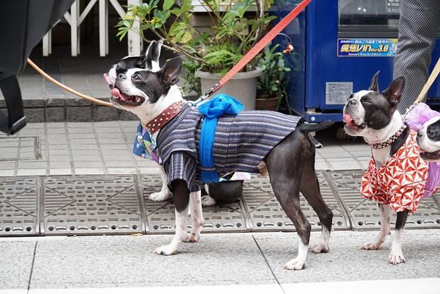 祭りの犬たち