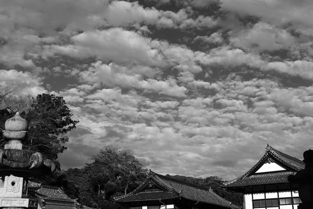 成田の秋空1