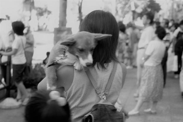 祭りに来た犬1