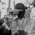 Photos: 祭りに来た犬1