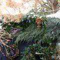 Photos: 森のクリスマス
