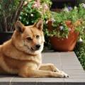 Photos: 美犬