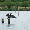 Photos: 水鳥