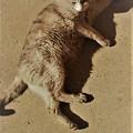 Photos: 猫セピア