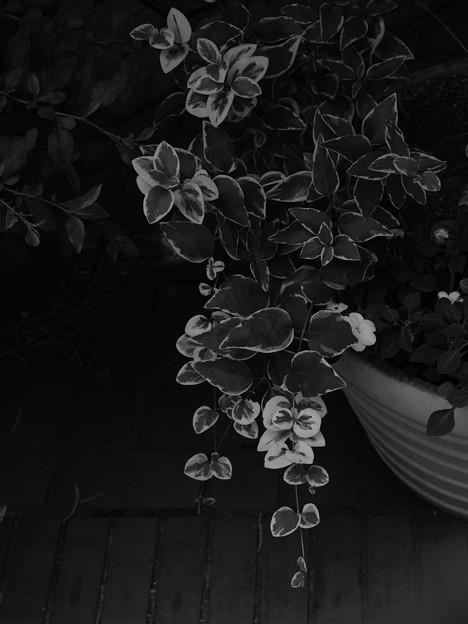 Photos: Ivy