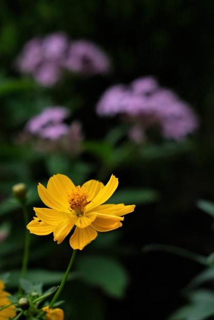 Photos: 晩秋の黄色
