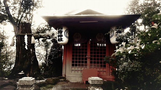 稲荷神社、雨。