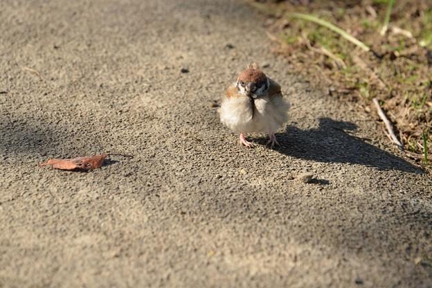 Photos: 小さいふわもこ