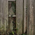 Photos: 木塀アート