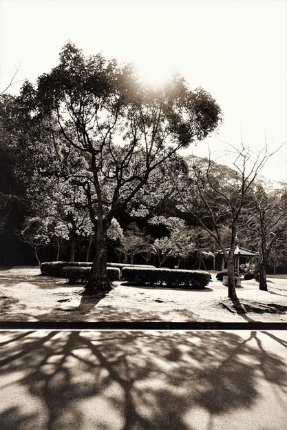 Photos: 暮秋の光