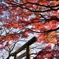 Photos: 紅の波
