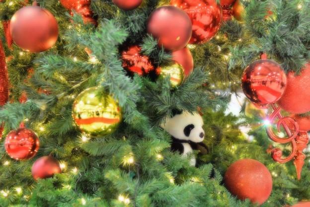 パンダのツリー
