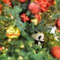 Photos: パンダのツリー
