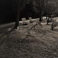 Photos: 冬の公園